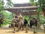 Elephant trekking in Kata : 30 mins drive