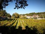 Wine tasting near Fayence. (Our famous French Rosé wine)