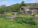 Laneside Farm in summer