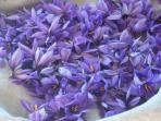 Quelques fleurs de safran !