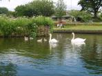 BOATING LAKE ... in nearby Newquay.  There is lovely cafe,  rowing boats, pedalos  for hire.