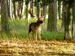The Phoenix Park is full of deer from Charles II's time - you will probably meet them on a walk