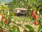 Località il Piano farmhouse, seen through the apple orchard