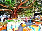 Port Douglas Markets - on every Sunday and only a few minutes stroll away