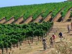 The Sonoma Cyclery is on our block!  Why not plan a fun ride to one of many trails in the area?