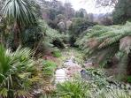 Trebah Gardens near Falmouth.  One of the many sub tropical gardens thriving in Cornwall