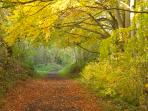 A walk in the Chilterns