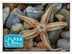 A starfish seen on the beach just near the lodge.