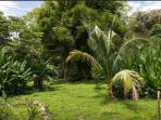 Campsite in gate property in Atenas Costa Rica