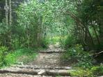 The Hessie Trail is like a magical forest in summer