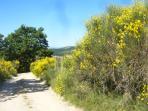 Villa La Rogaia - hiking in honey scented May