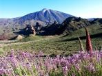 52 Kms away. Teide mountain. Autochthonous flowers.