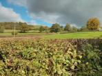 A view from inside 'West garden' s  hedge