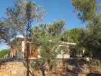 la maison à travers les oliviers