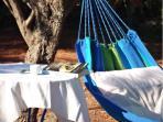 le 'mésimériano hypno' sous les oliviers du jardin