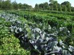 our organic market garden