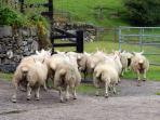 Experience life on a Welsh working farm