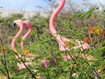 flamingo's in de tuin