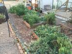 Help yourself to fresh herbs and vegetables in our organic garden