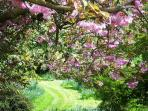 Springtime in the mature gardens of this Scottish holiday house near Edzell