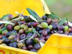 Our wonderful oil olives.
