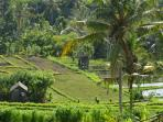 Beautiful Bali - the rural areas of eastern Bali that are seen on the trek near the villa