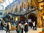 The Natural History Museum 500m away