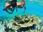 The best snorkeling and diving