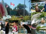 Trainer for a day... ? Sea Lions that Paint...! Sharks & Sting Rays Gardens & Boutiques