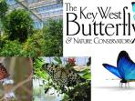 Jewels in Flight both in key West and at the Fairchild there are wonderful Exotic Butterfly Houses