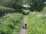 West Lane is a bridle path adjoining the cottage - you can take a fab circular walk of an hour