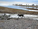 Dogs are allowed all year round at Kimmeridge Bay - take in Corfe Castle on the way