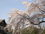 Kyu-Furukawa Gardens, 10 mins walk from this apt.