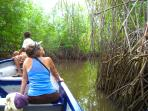 A nice ride in the mangroves on a boat, on the estuary.