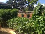 Organic vegetable garden - guests are welcome to enjoy edibles in season!