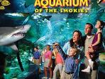 The Aquarium is 12 miles in Gatlinburg
