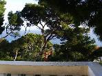 A3(2+2): terrace view