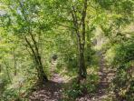Woodland footpaths