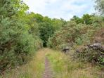 Woodland footpaths