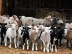 experience life on the farm