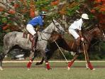 Polo and many more activities