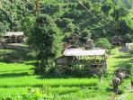 thai apache propose aussi des ballades en jungle en suivant.. le pas des elephants..elephantsteps