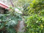 TROPICAL PLANTS LINE THE PATHWAY