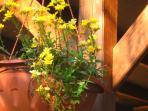 I nostri fiori e la pergola