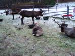 Visit the reindeer centre at Glenmore a short drive from apartment . Feed them up on the hill.