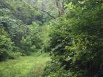 Lush walking trails