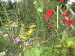 le jardin et ses fleurs