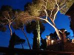 Evening lighting of parasol pines and terrace
