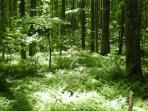 Fern Trail in Summer (onsite hiking)