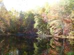 Spring fed fish pond in fall (short hike from cottage)